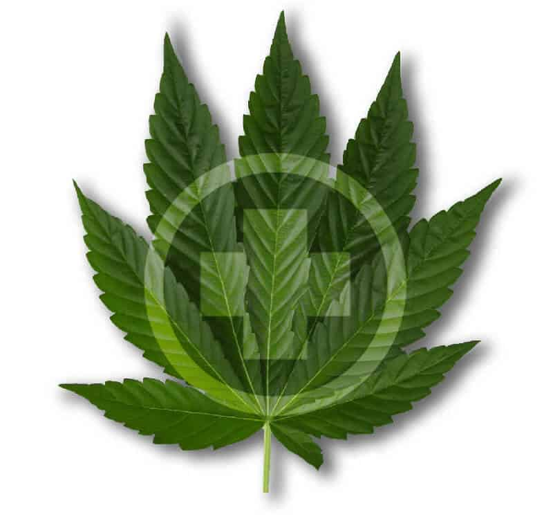 cannabis leaf with medical insignia on top of it