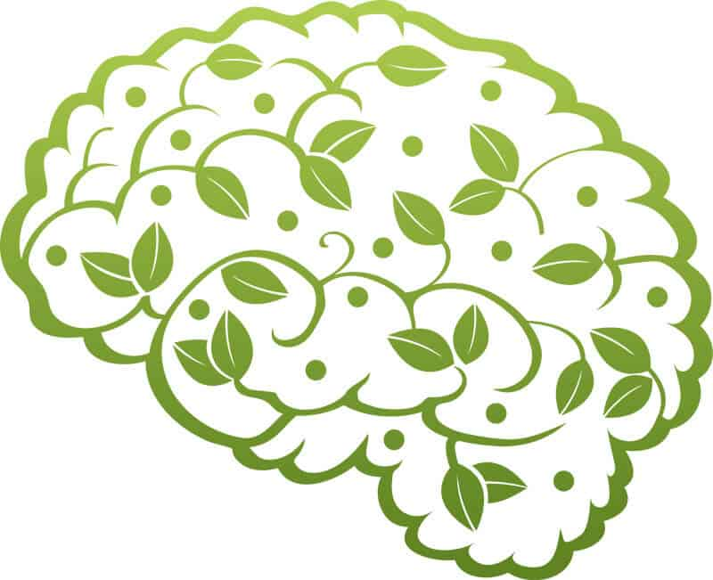 vector image of a brain with leaves on it