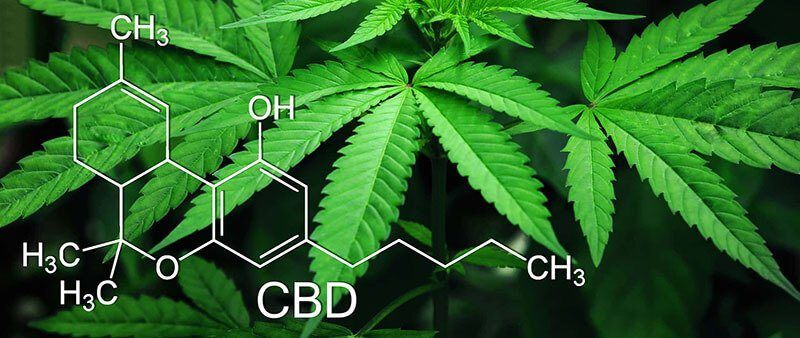 CBD chemical formula over cannabis leaves