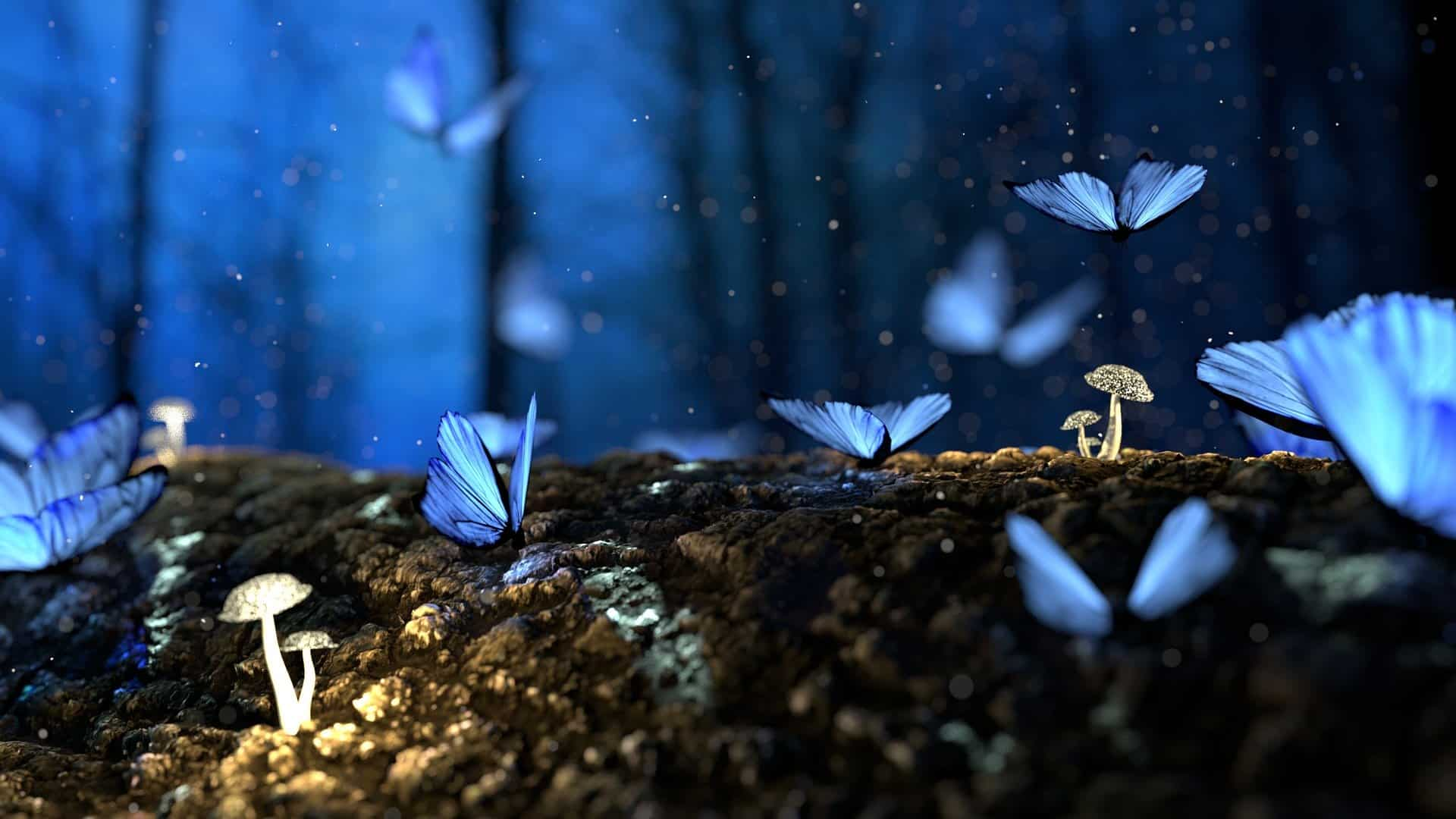 dream with butterflies