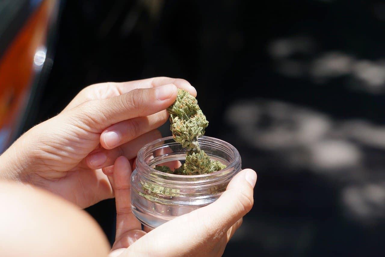 cannabis bud in a glass jar
